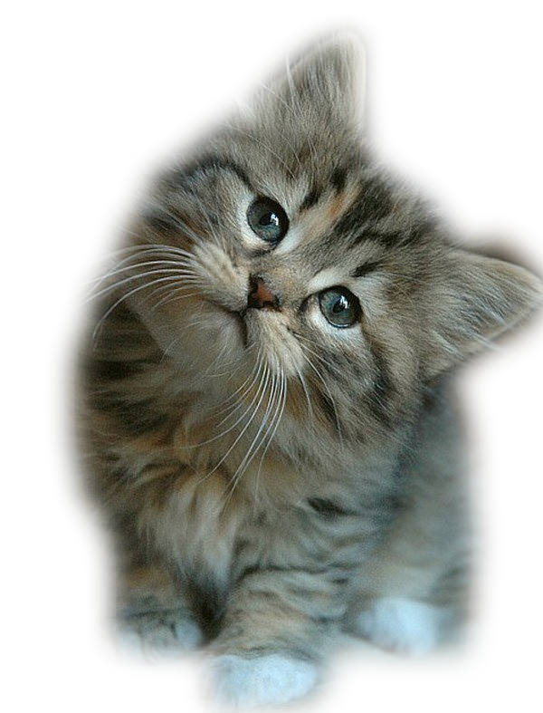 Les chats - Chaton marrant ...